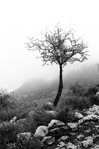 Mycenae in Black and White (photo by corymcburnett.com)