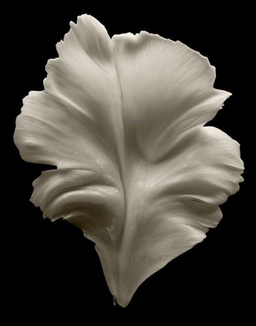 Tulip Petal - Seamus A. Ryan