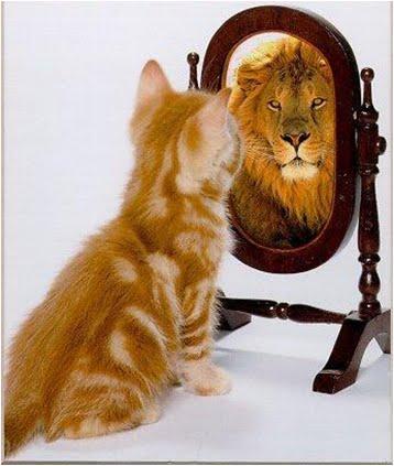 gatinho e leão