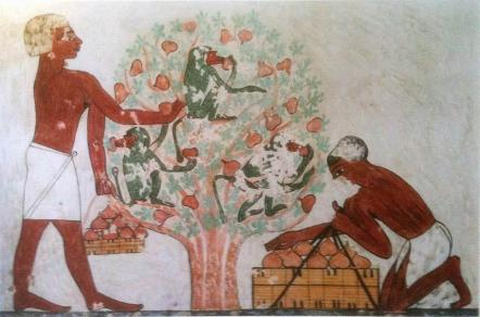 Picking Figs. 1890 BCE. 12th dynasty. from tomb of Khnumhotep