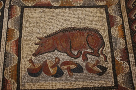 A truffle pig with his spoils (Museum of animals in the Vatican Museum, Rome).