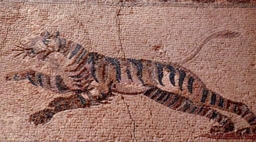 mosaico-tigre chipre
