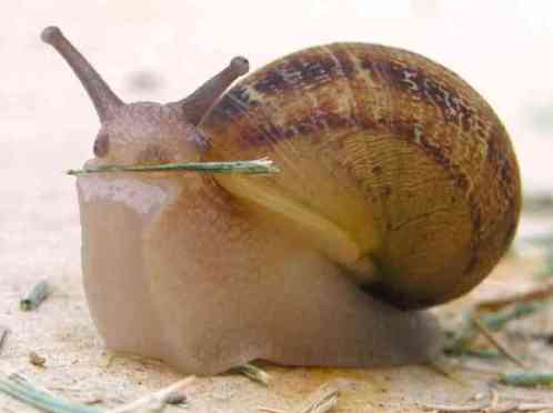 snail-8296a552f7bd1064368205306ff8a3c7c7bdc7c4-s6-c302