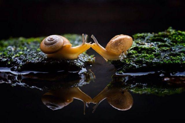 snail-kiss