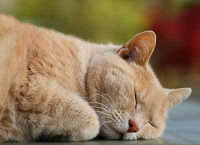 gato-duerme-mucho