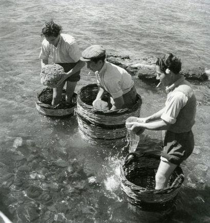 EGINA-COGIENDO ESPONNJAS 1950